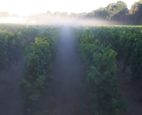 Levé du soleil sur nos vignes
